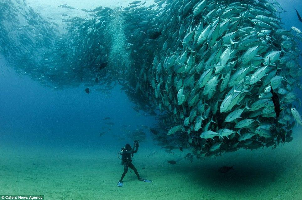 photog-fish