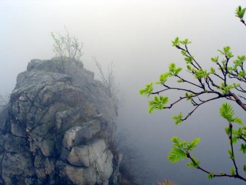 zen-fog1