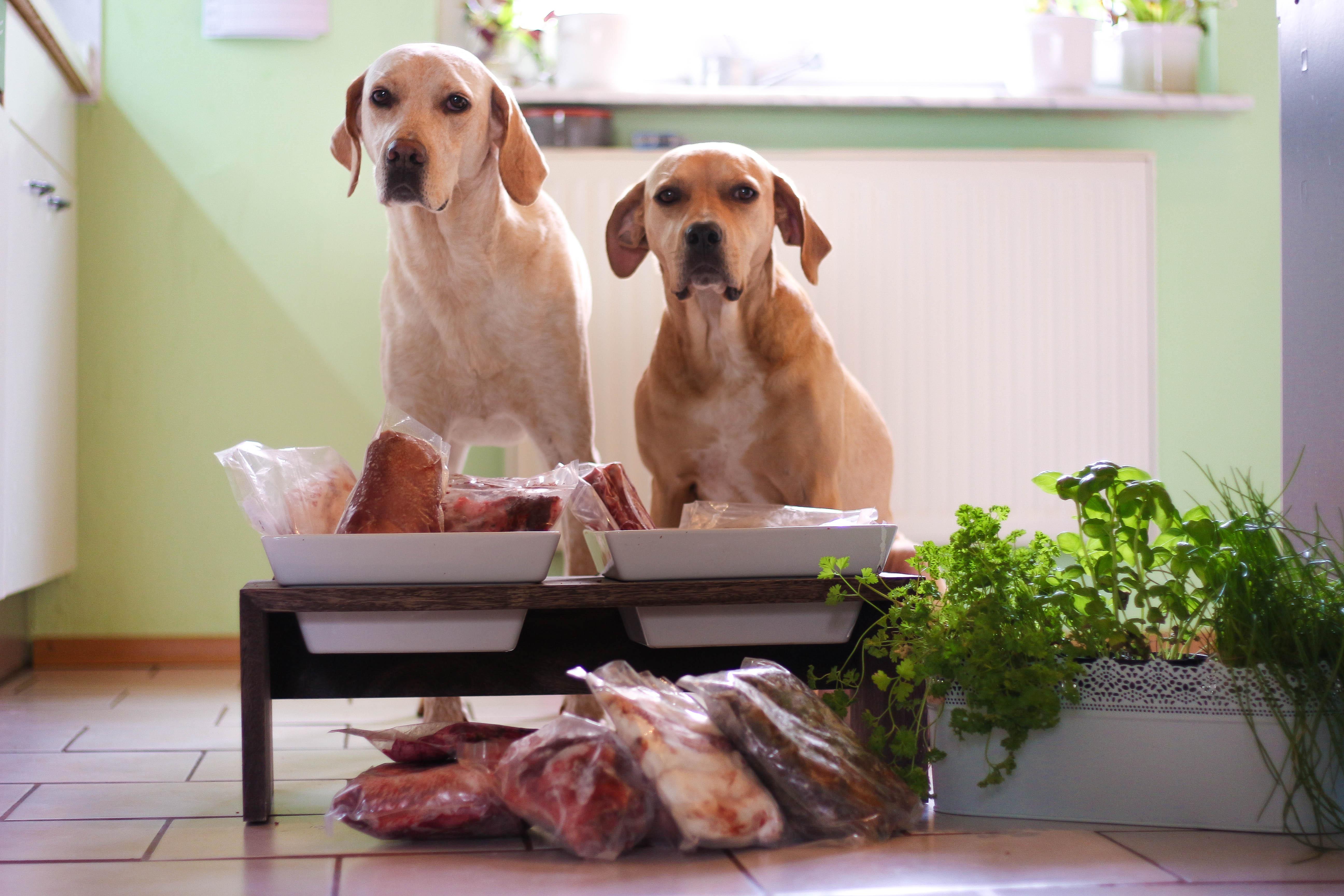 B.A.R.F. 1 Die artgerechte Ernährung für Hunde!