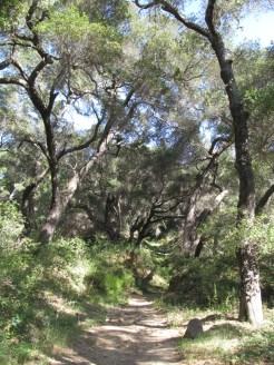 Tequepis bottom trail