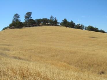 California golden