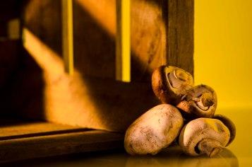 Siamesische Pilze