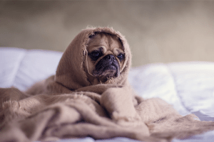 puppy wrapped in a blanket | Psychologist | Fort Lauderdale, FL