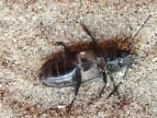 Cockroach outside the door