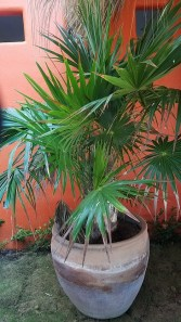 Plant at Hotel Estrella de Mar, Zipolite