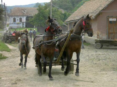 """""""Wenn einem die Pferde durchgehen"""" - Für Karl wurde es knapp"""