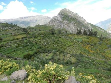 Viele Berge die ich sehe sind mit Terrassengärten angelegt - unzählige ...