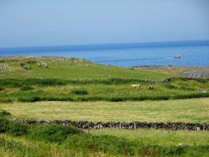 Grün, Kühe, Meer - die Schafe fehlen noch