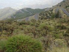 In den Bergen bei Baza, Andalusien. Von Tijola nach Velefique. A-3102