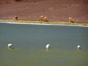 Lagune am Paso Pircas Negras