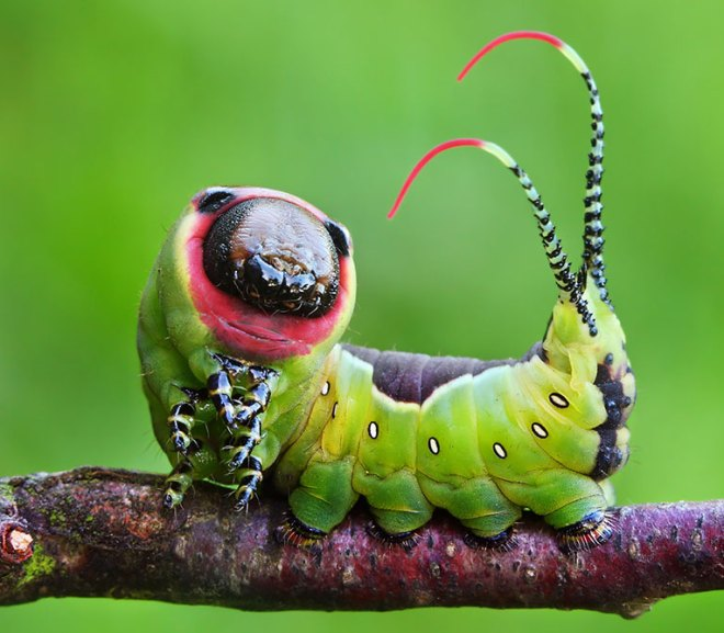 Check out these AMAZING Larvae to Butterfly Transformations