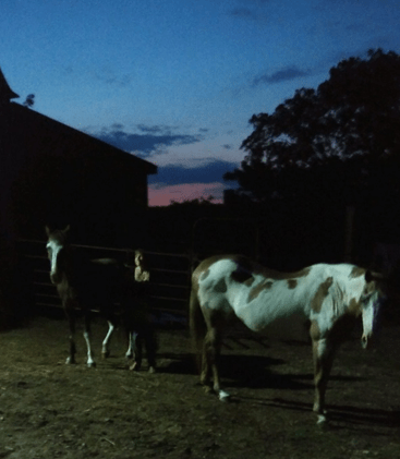 Horse Therapy – Living Without Defenses