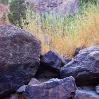 Cañas sobre las rocas