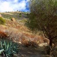 Camino hacia el pico de Bandama