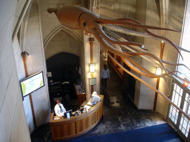 peabodymuseum-squid.jpg