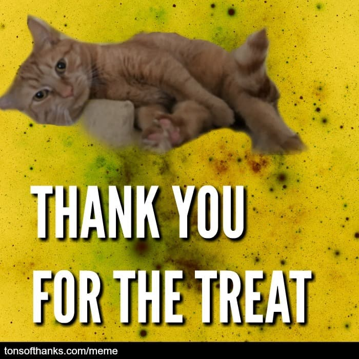 thank you for the treat cat meme