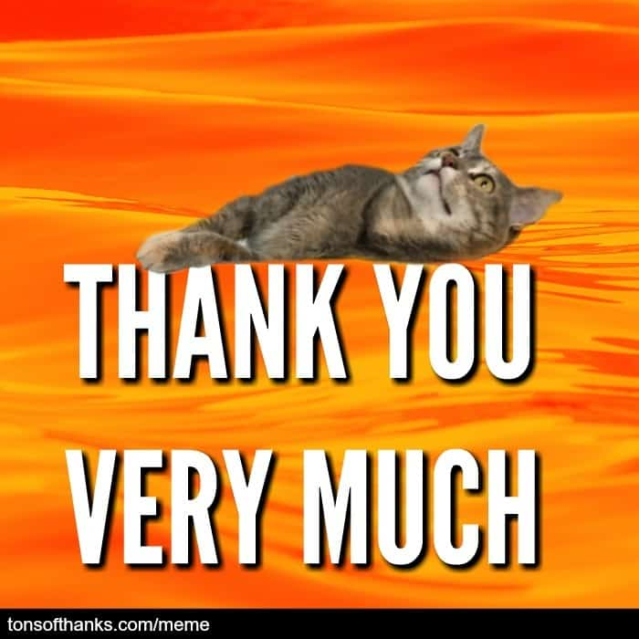 thank you very much cat meme