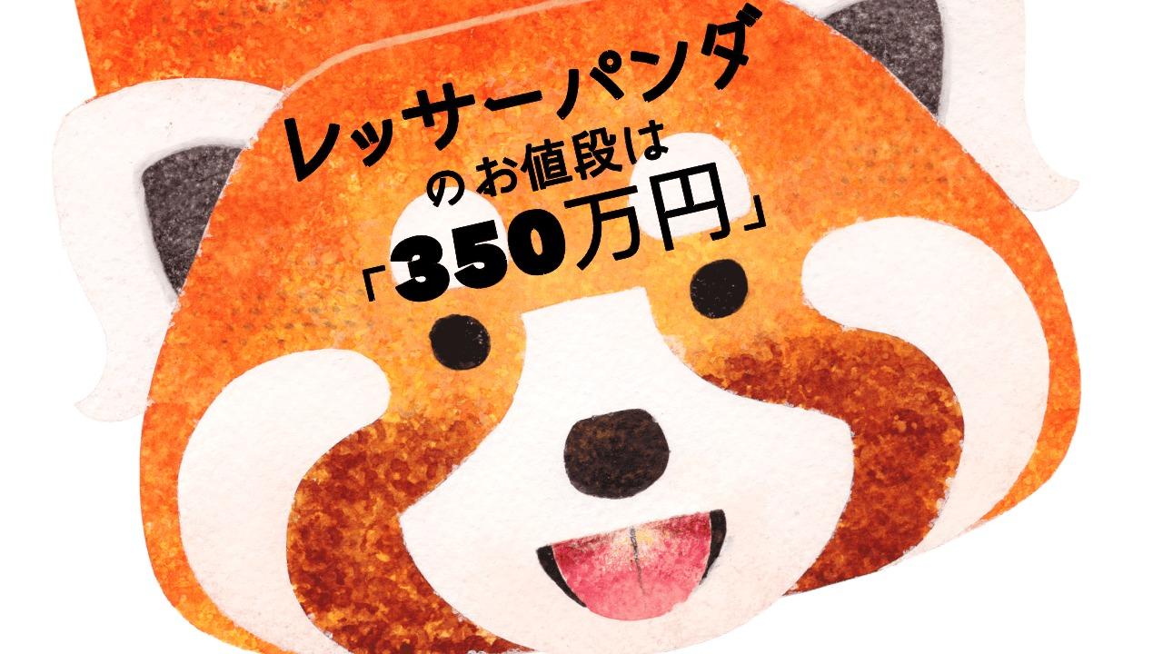 レッサーパンダの値段は「〇〇万円」