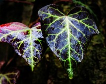 ivy-nature-macro