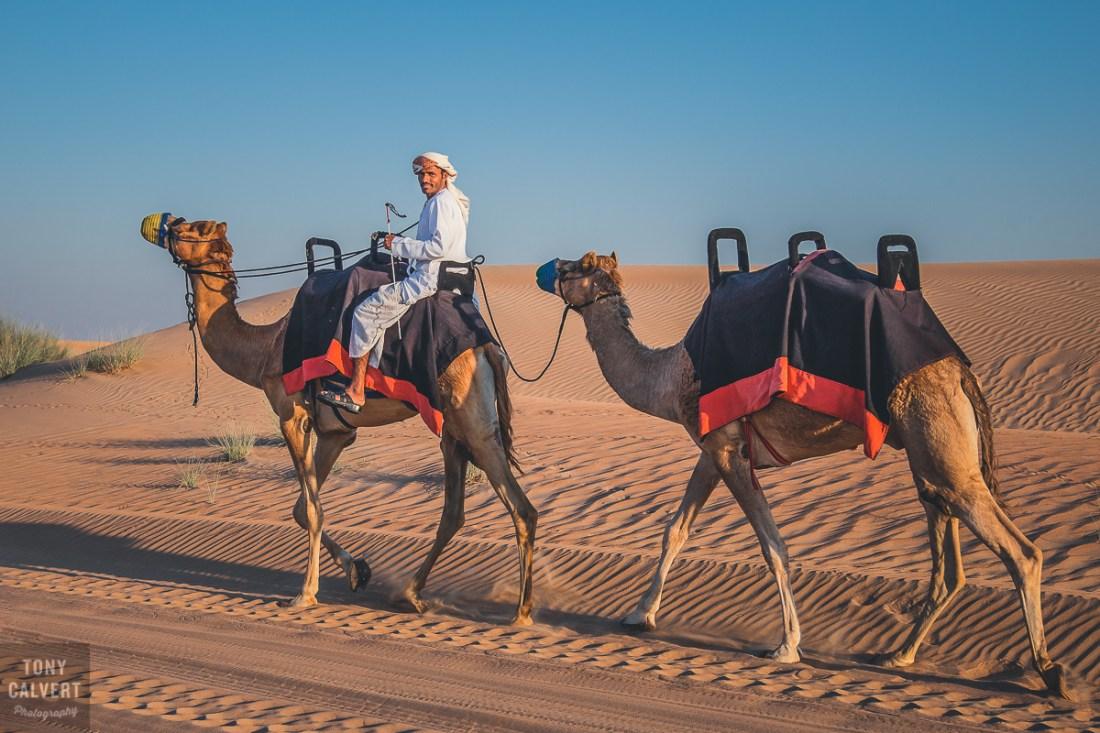 Camel rider in the desert