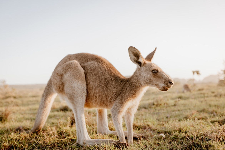 ภาคการเรียน ออสเตรเลีย กำหนดการเปิดเทอมของประเทศต่างๆ