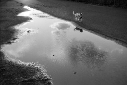 Dog puddle, Parramatta River, Ermington