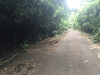 Service Roadway