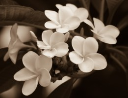 Flowers at the Royal Hawaiian Hotel