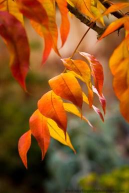 leaves (1 of 18)