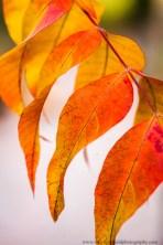 leaves (5 of 18)