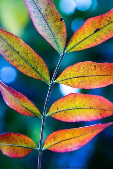 leaves (7 of 18)