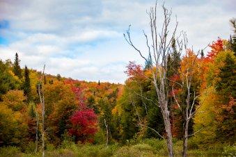 Vermont 2 (11 of 12)