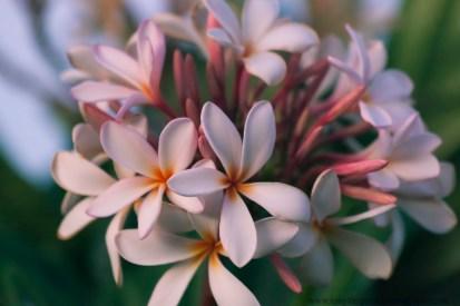 Maui flowers (10 of 12)