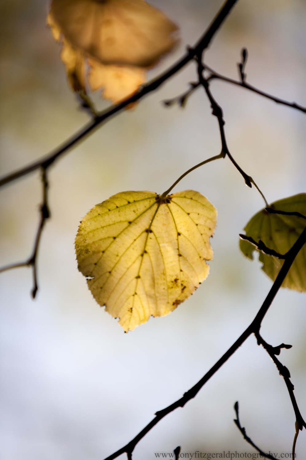 Strasbourg France, fall leaves