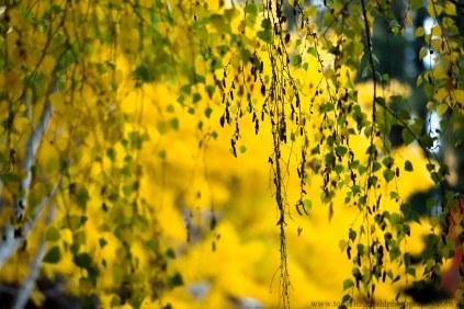 leaves (14 of 18)