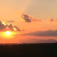 Sunset over tomato fields.
