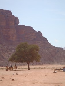 Tree in Wadi Rum