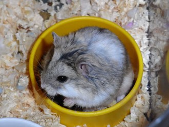 Hedgehog in dish