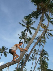 Tony up Palm Tree 1