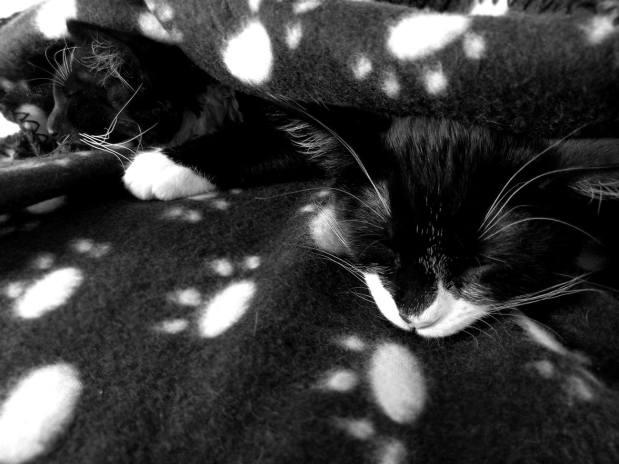 Baby Tommy & Bella