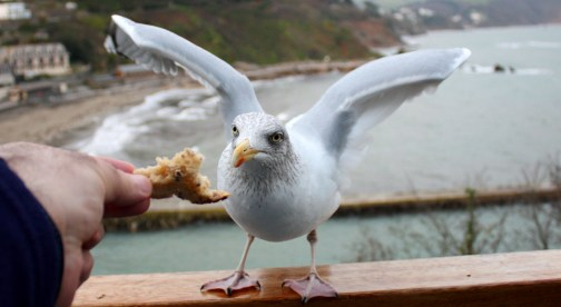 A new writing pal in Looe, England.