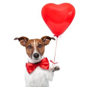 dog_heart_love