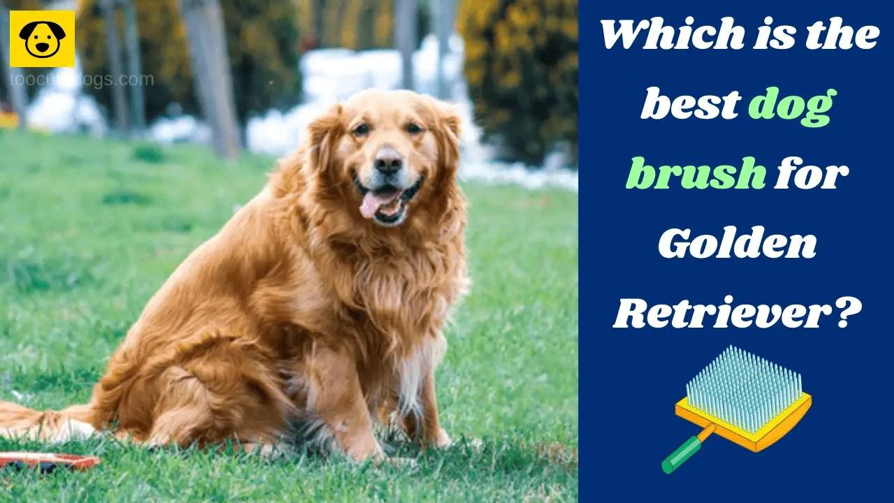 Best Dog Brush for Golden Retriever