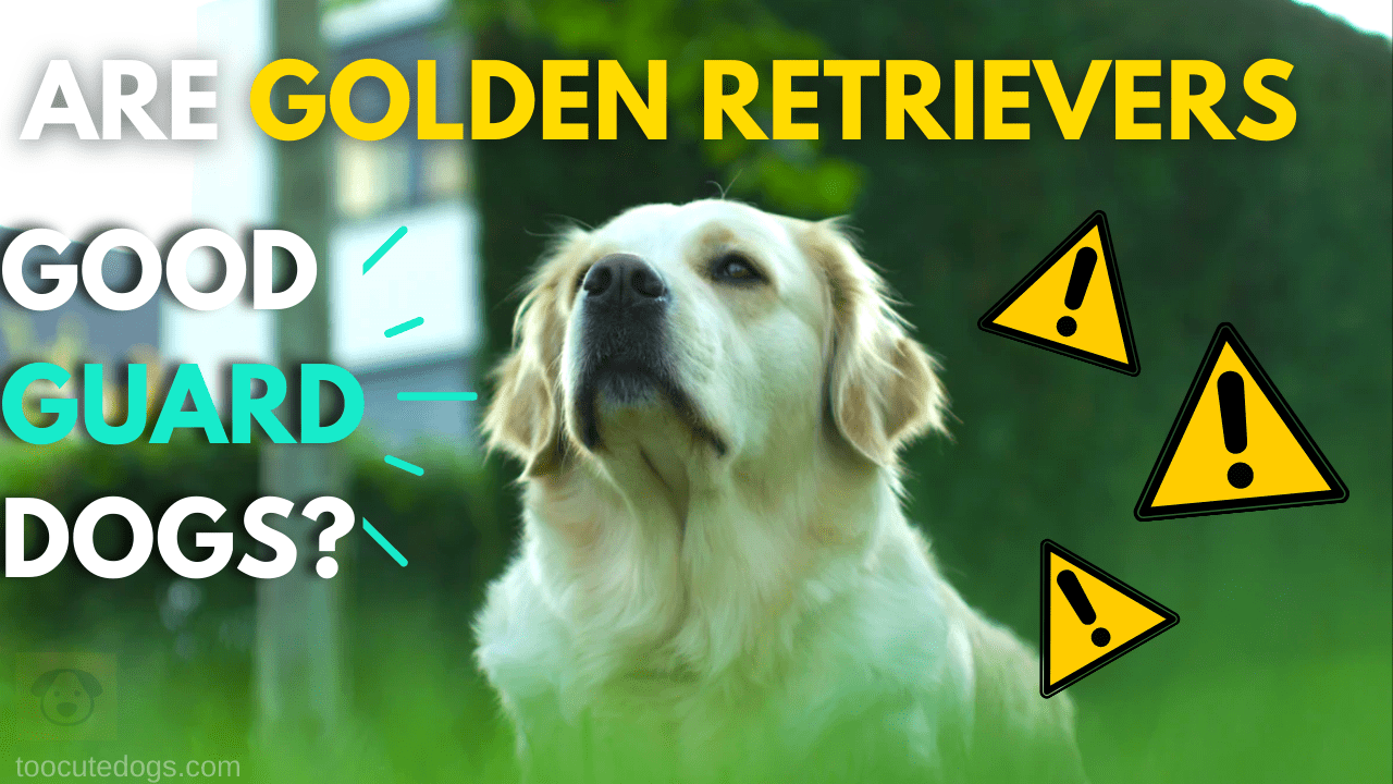 are golden retrievers good guard dogs