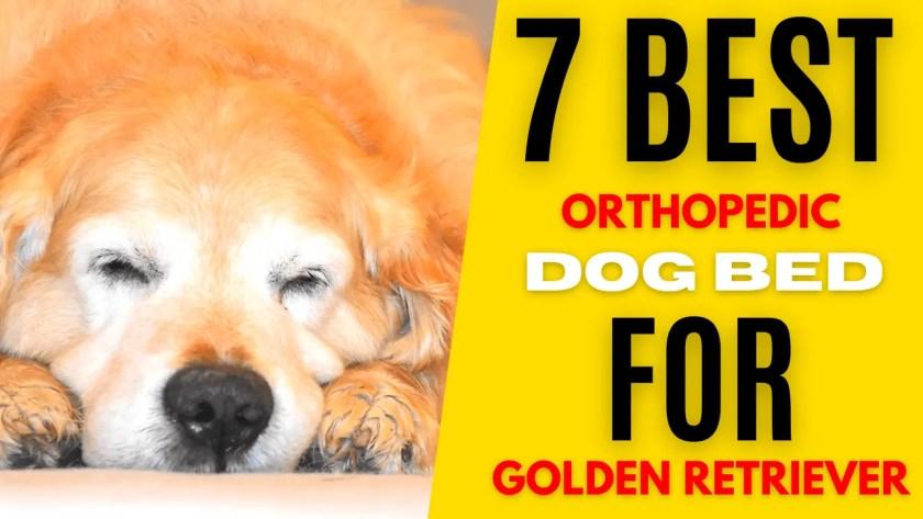 best orthopedic dog bed for golden retriever