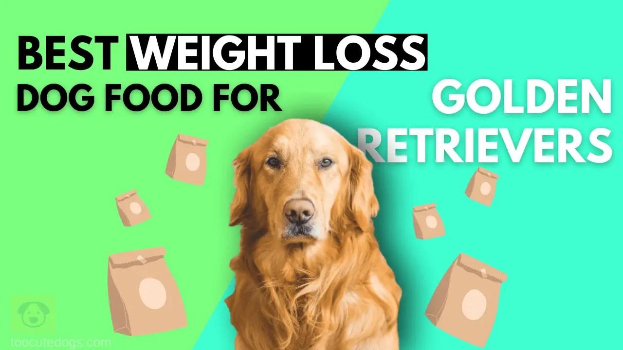 Best Weight Loss Dog Food For Golden Retrievers