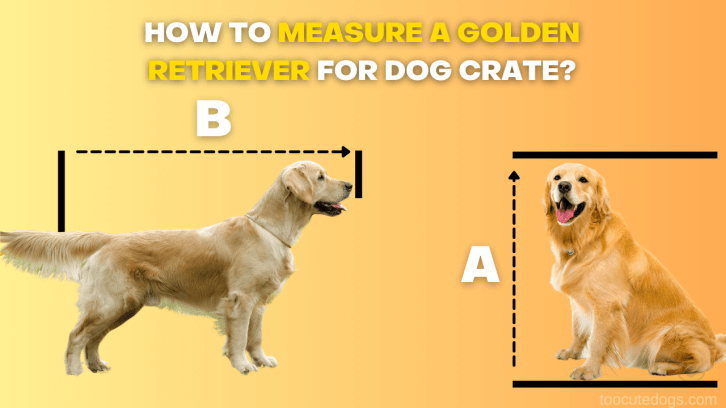crate size for golden retriever