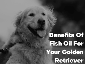 Benefits Of Fish Oil For Your Golden Retriever