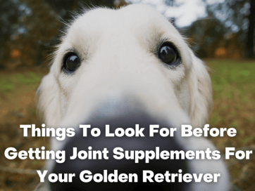 Things To Look For Before Getting Joint Supplements For Your Golden Retriever