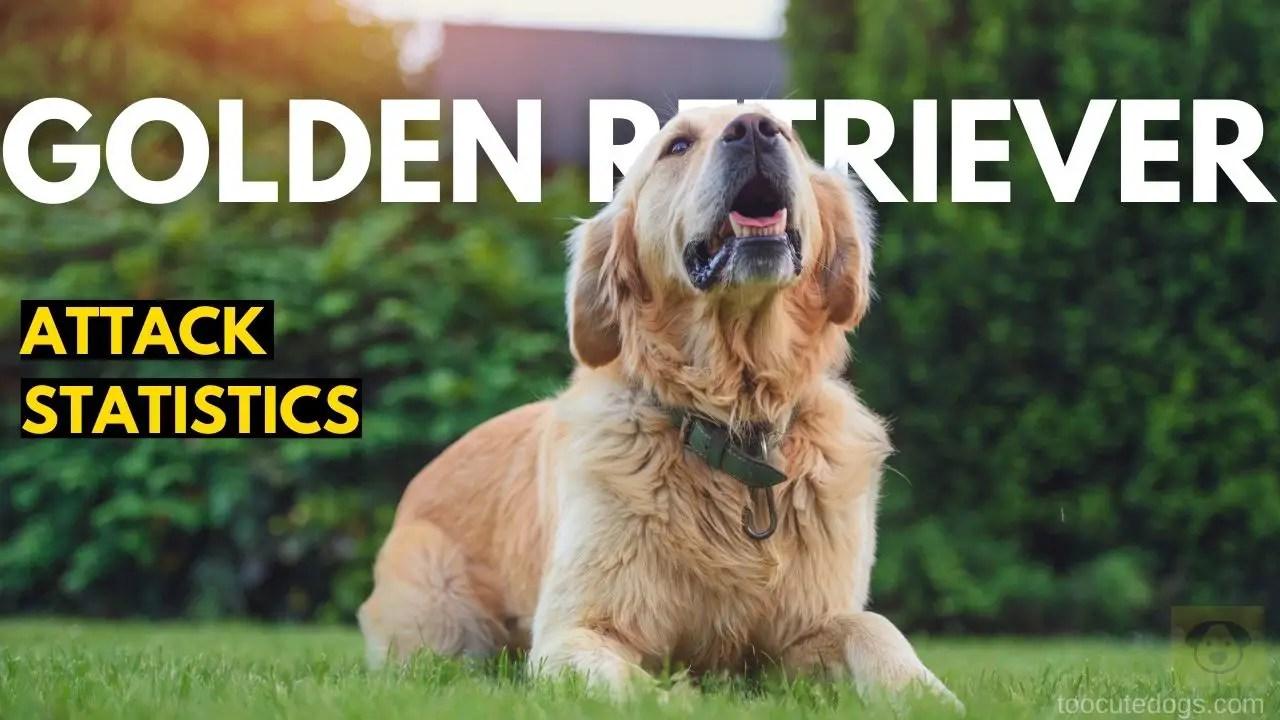 Golden Retriever Attack Statistics